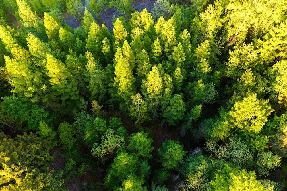 arborist products